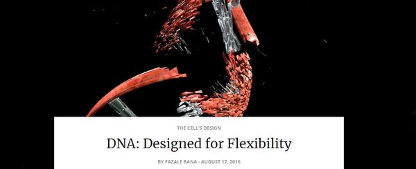 dnadesignedforflexibility