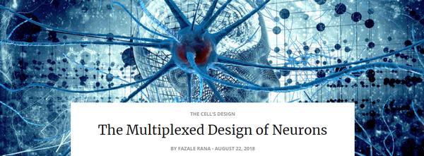 multiplexeddesignneurons