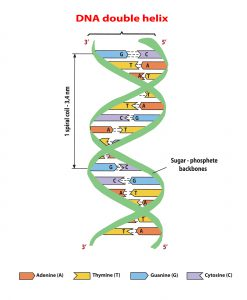optimal-design-of-the-genetic-code-2