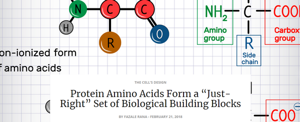 proteinaminoacids