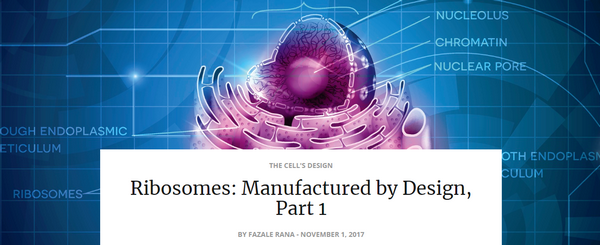 ribosomesmanufacturedbydesign1
