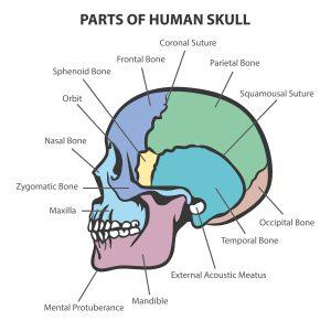 skullfigure2
