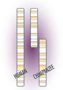 yeast-gene-editing-study-1