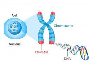 yeast-gene-editing-study-2