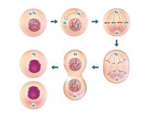 yeast-gene-editing-study-4